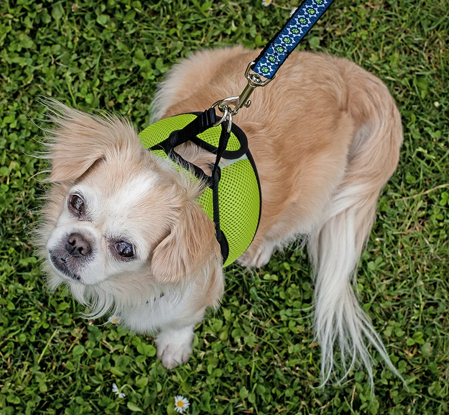 XX-Large Comic Sounds RC Pet Products Cirque Soft Walking Step-in Dog Harness