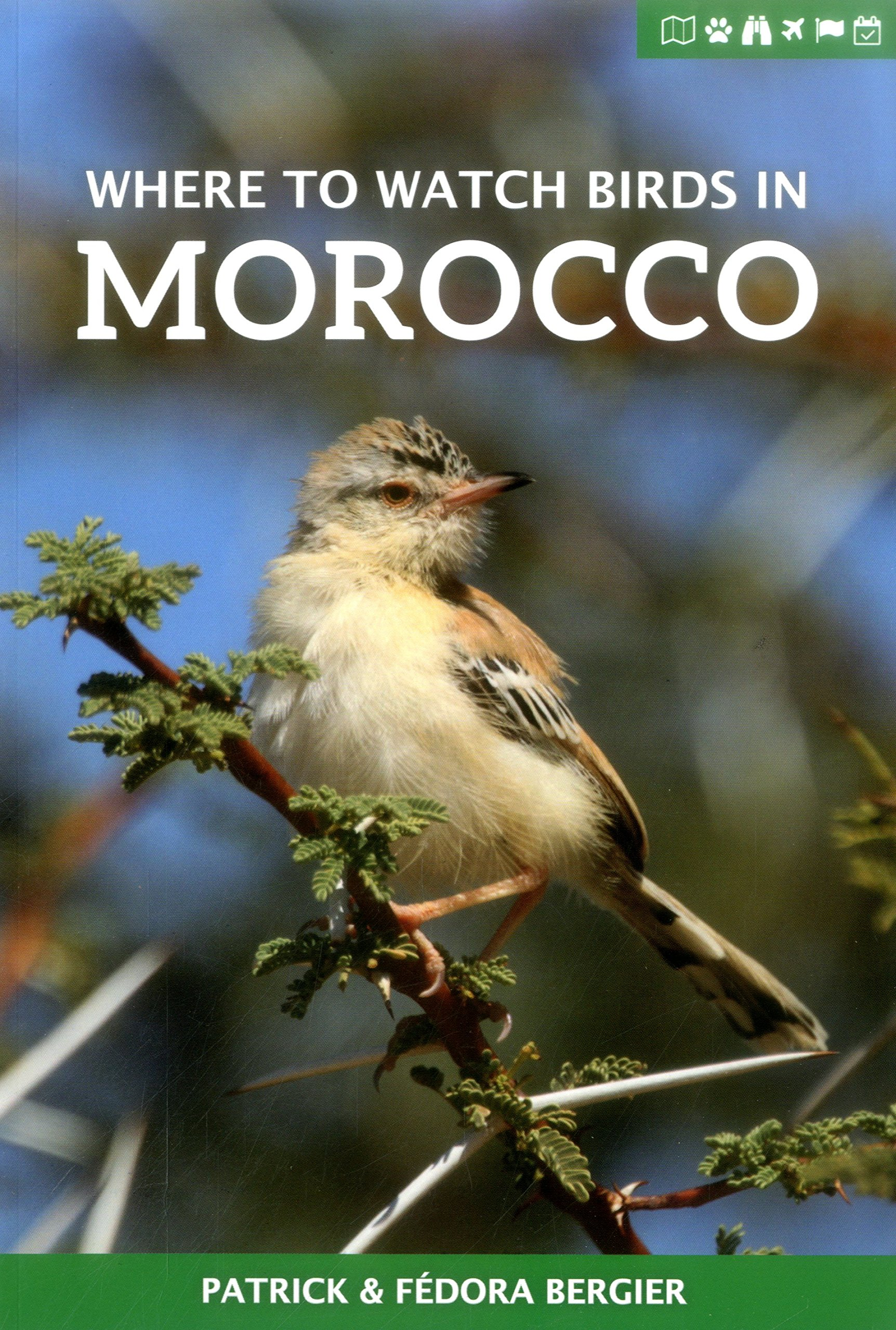 Where To Watch Birds In Morocco  Where To Watch Guides