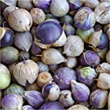 Package of 50 Seeds, Purple Milpa Tomatillo (Physalis ixocarpa) Non-GMO Seeds By Seed Needs
