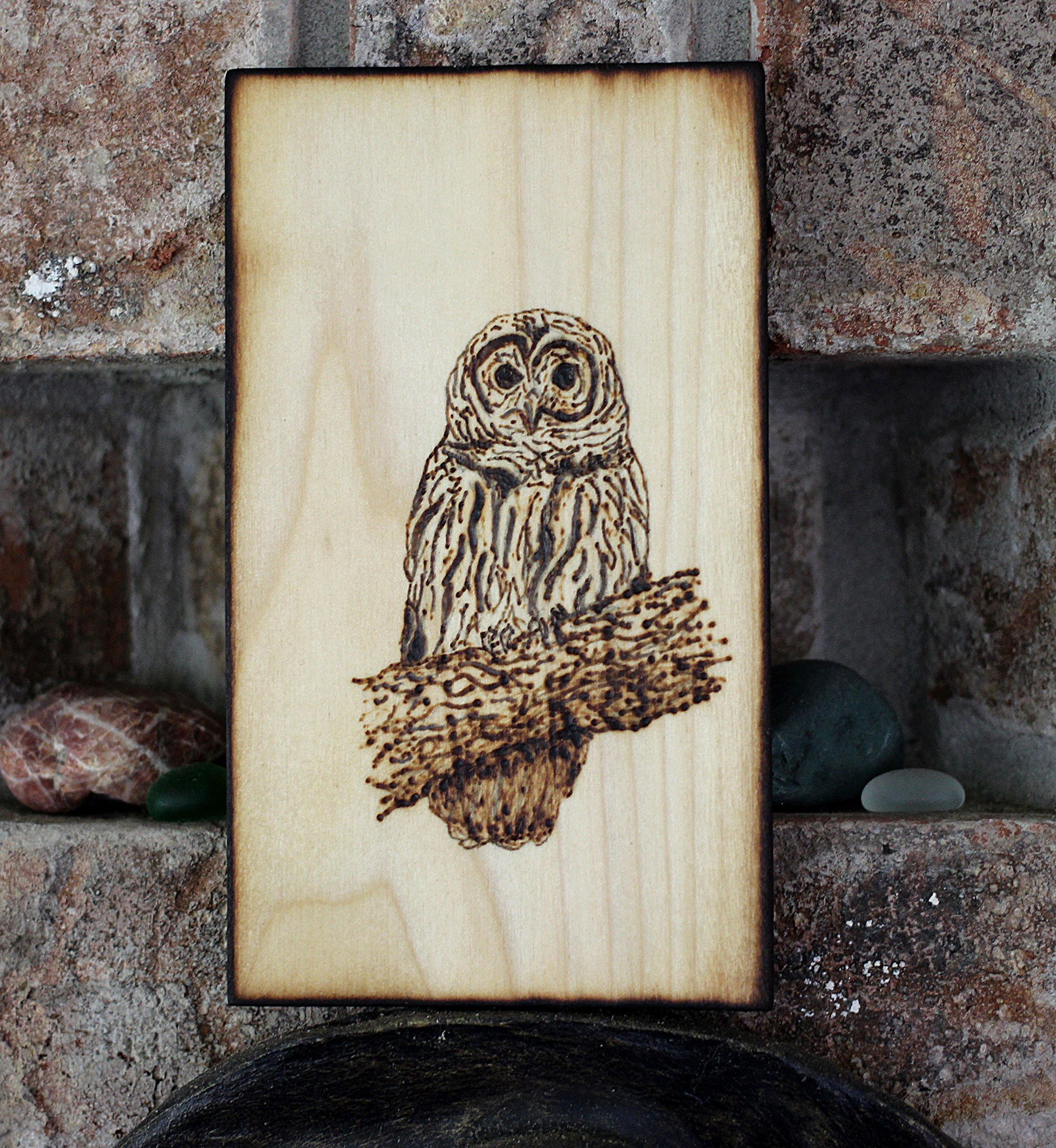 Wood Burned Barred Owl Pyrography Small Woodburned Bird Nature Wildlife Picture