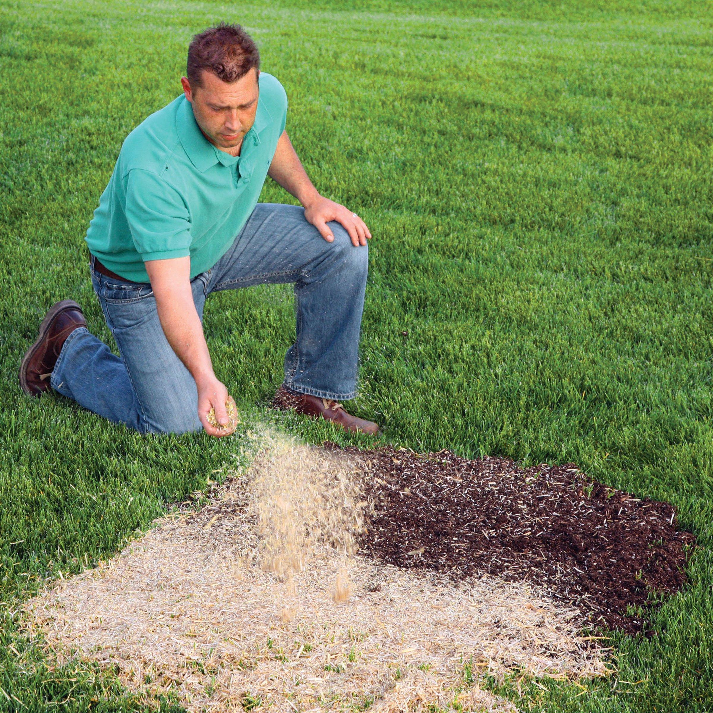 EZ Straw Seeding Mulch With Tack by EZ Straw (Image #4)