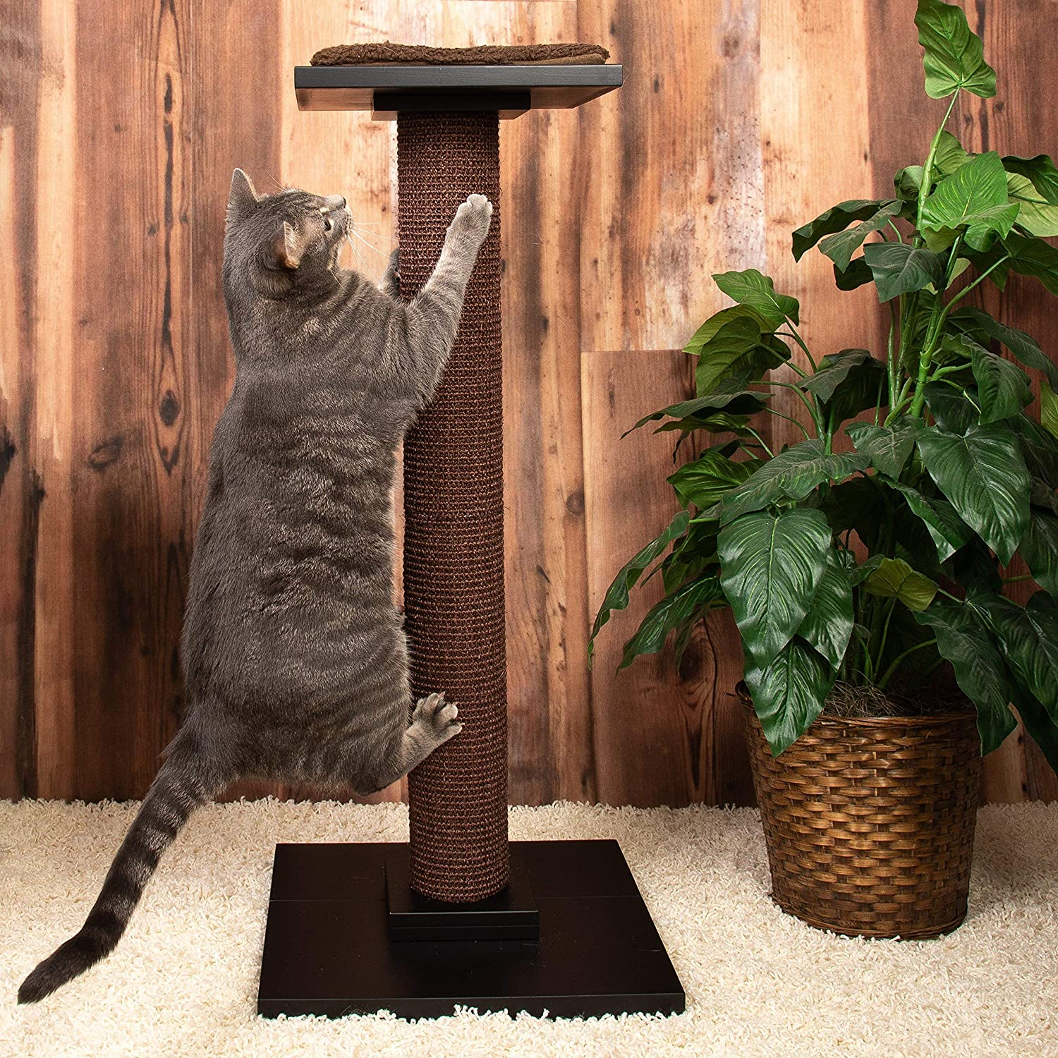 Extra tall modern cat scratcher post with bed