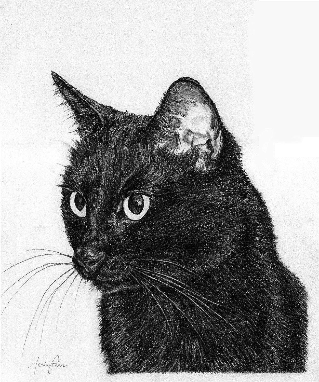 Custom Pencil Pet Portrait with optional spot watercolor