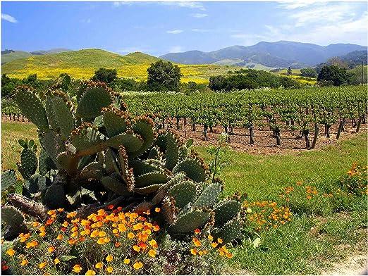 El jabili viñedo, Alma Rosa bodega y viñedos, Buellton, ca de pared Art fotografía por Janet diseño de Penn: Amazon.es: Hogar