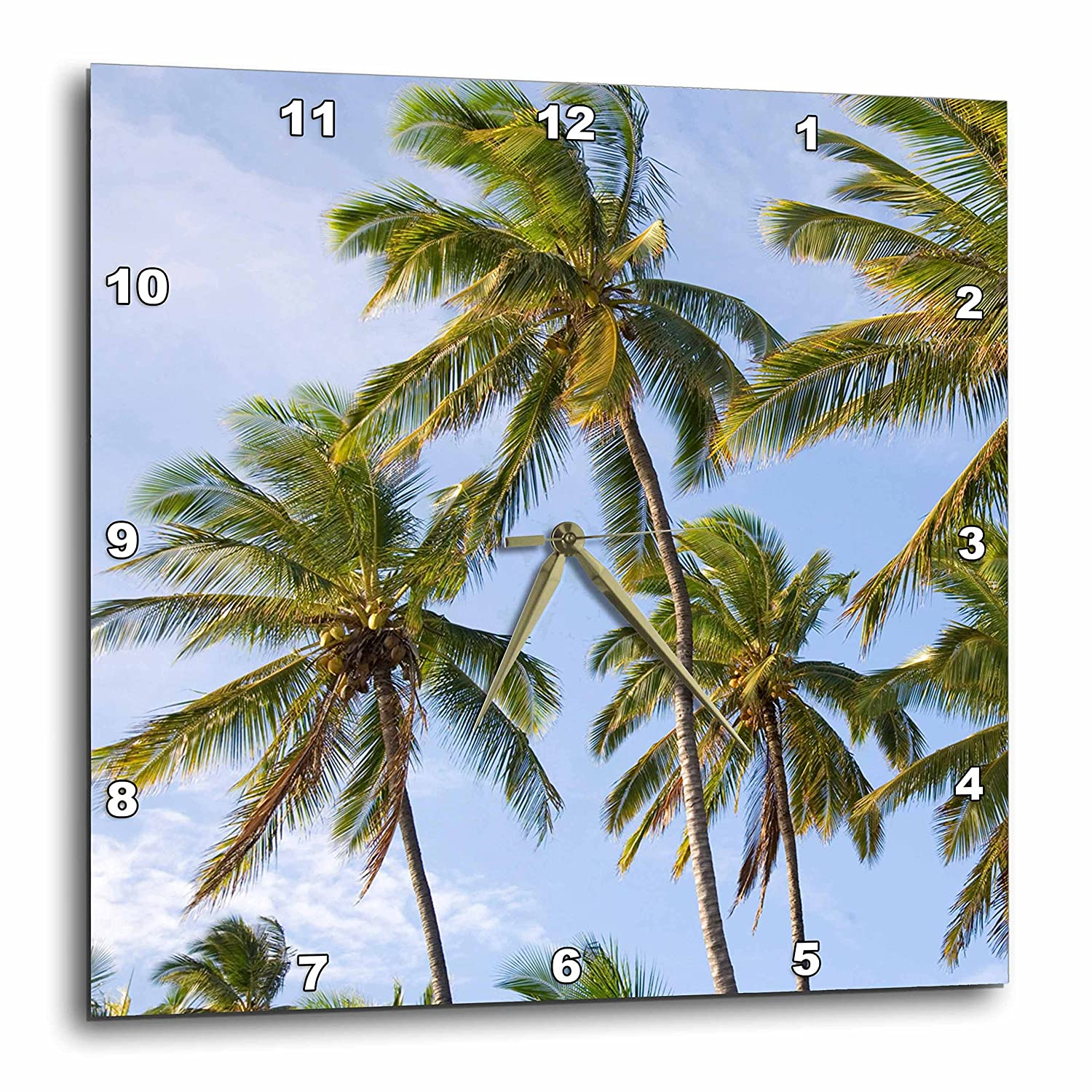 3dRose Coconut Palm Trees Douglas Peebles 13 by 13-Inch Wall Clock DPP/_83382/_2 Na01 Dpb0008