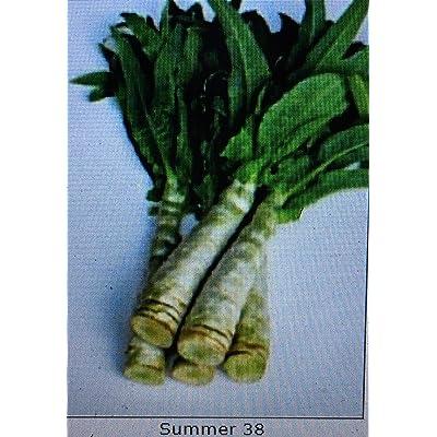 1/2-OZ BigPak: 1/2-oz to 2-oz Celtuce (CDK) Seeds; Summer 38, 夏抗38莴笋, Heat Resistant Variety; stem Lettuce; Asparagus Lettuce : Garden & Outdoor