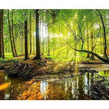 Decomonkey Fototapete Wald 350x256 Cm Xxl Tapete Wandbild Bild