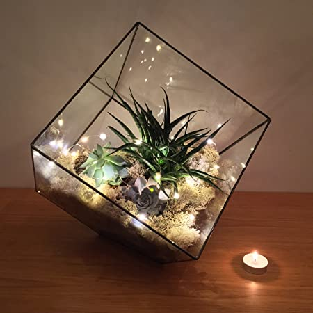 36cm High Extra Large Cube Terrarium With Live Succulent Plants And