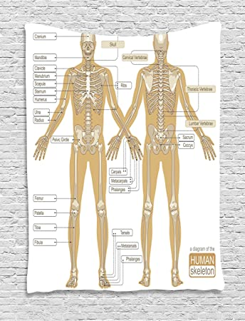 Amazon Human Anatomy Tapestry By Ambesonne Diagram Of Human