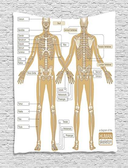 Amazon Ambesonne Human Anatomy Tapestry Diagram Of Human