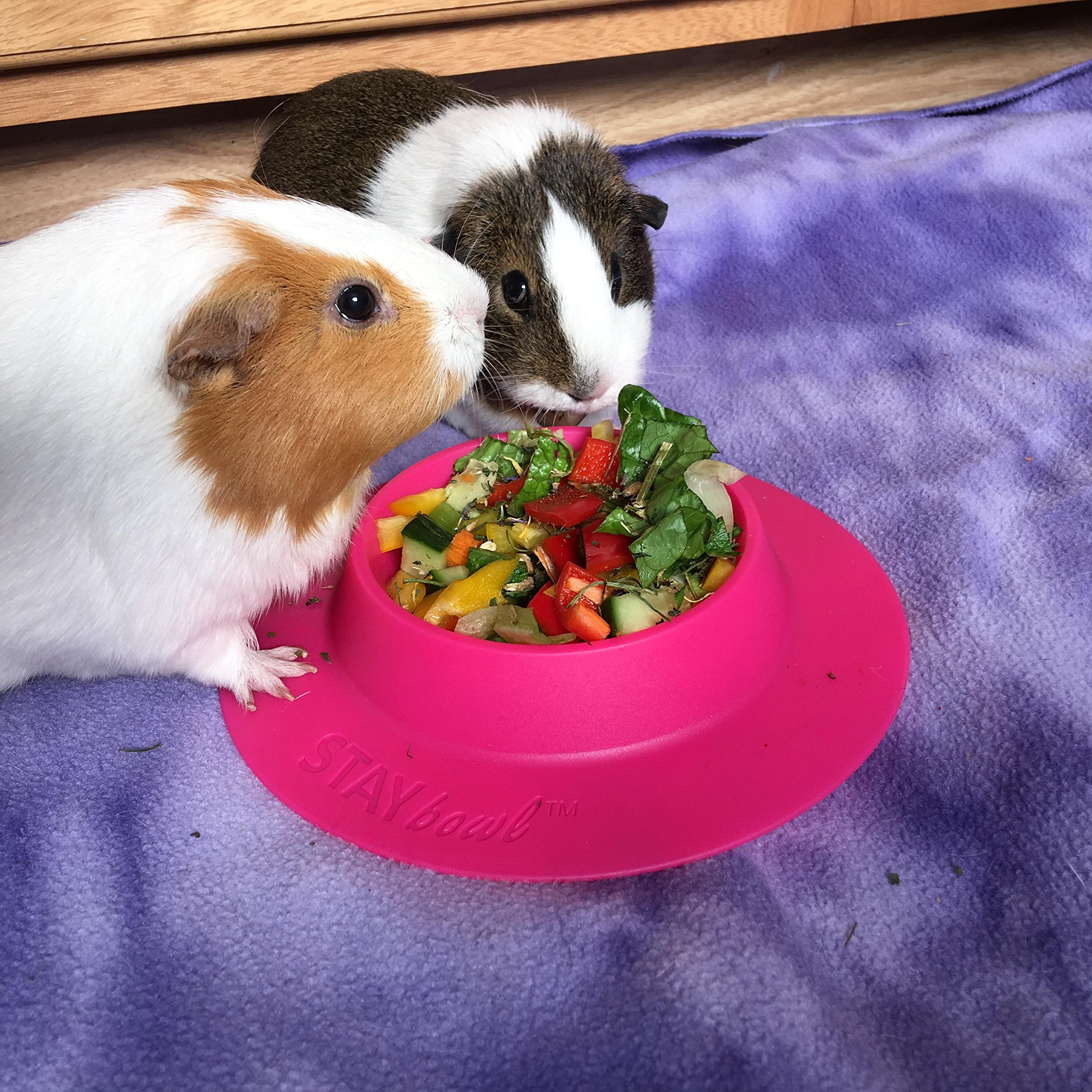 STAYbowl Tip-Proof Bowl for Guinea Pigs and Other Small Pets - Fuchsia (Pink) - Large 3/4 Cup Size New