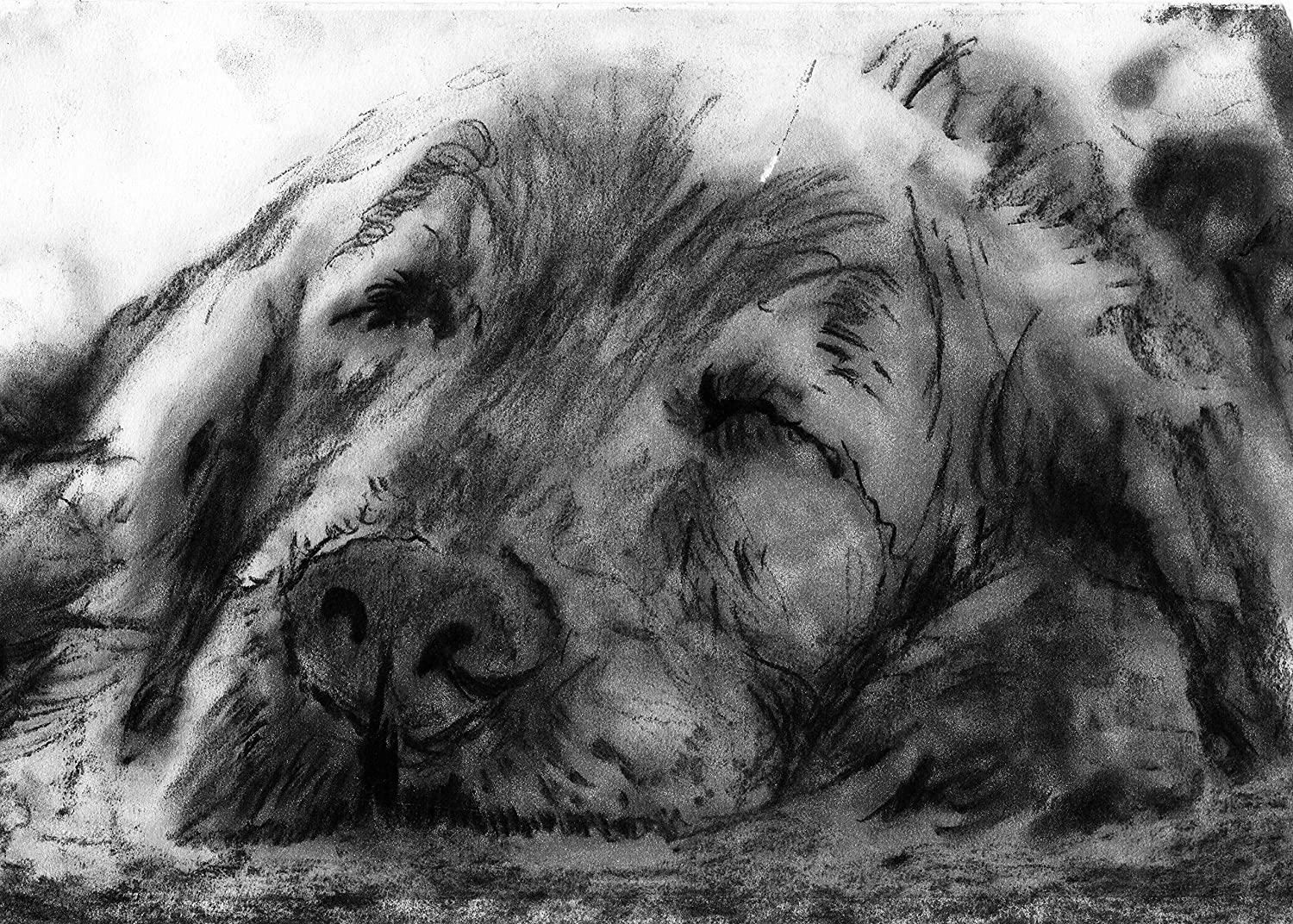 Amazon com black and white charcoal drawing sleeping golden