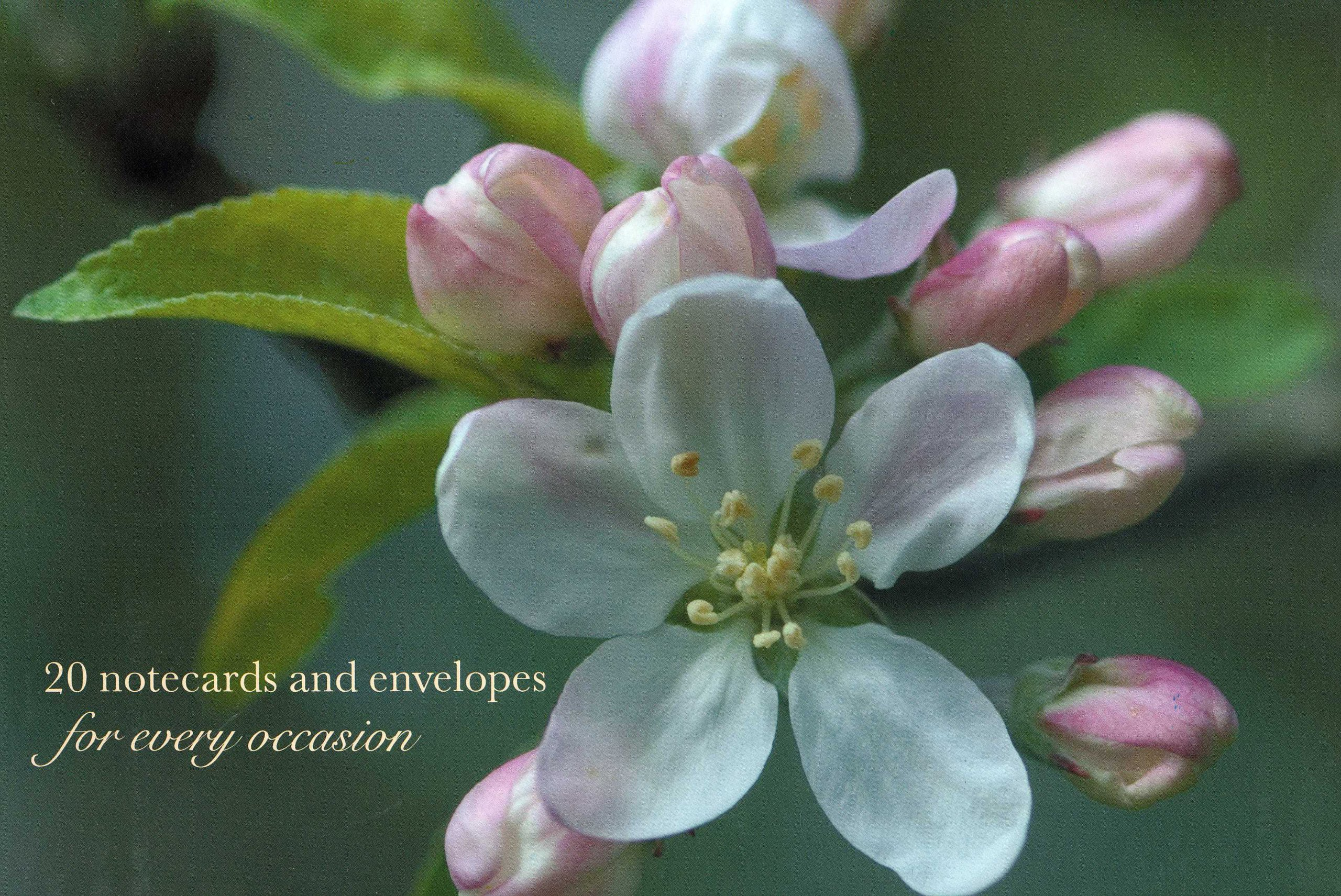 Download Card Box of 20 Notecards and Envelopes: Apple Blossom: A delightful pack of high-quality flower gift cards and decorative envelopes pdf