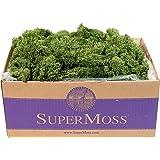 SuperMoss (25155) Reindeer Moss Preserved Box, 3 lb, Basil