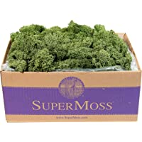 SuperMoss (25155) Reindeer Moss Preserved Box, 3lb, Basil