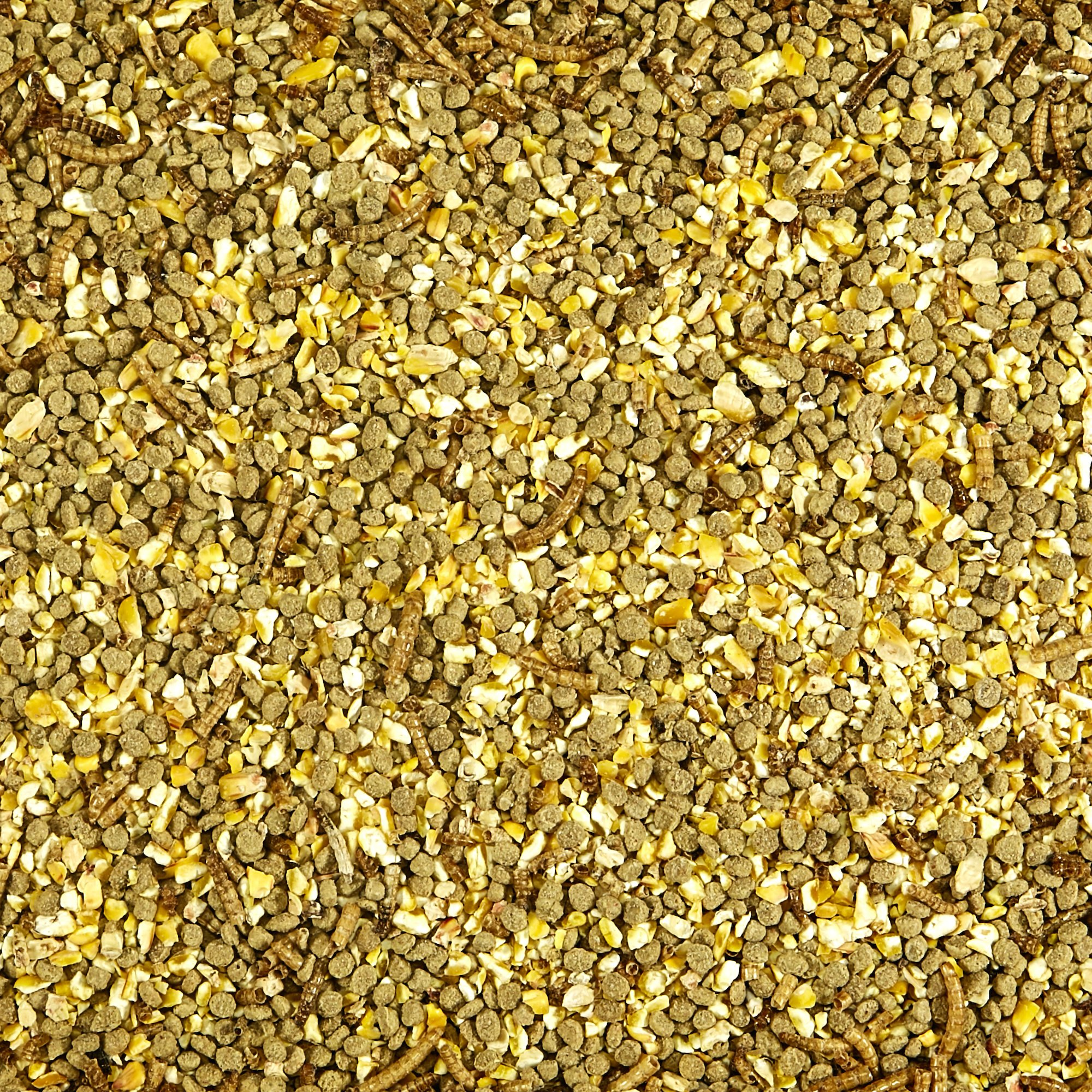 Kaytee Mealworms and Corn Treat, 3 Pound by Kaytee (Image #3)