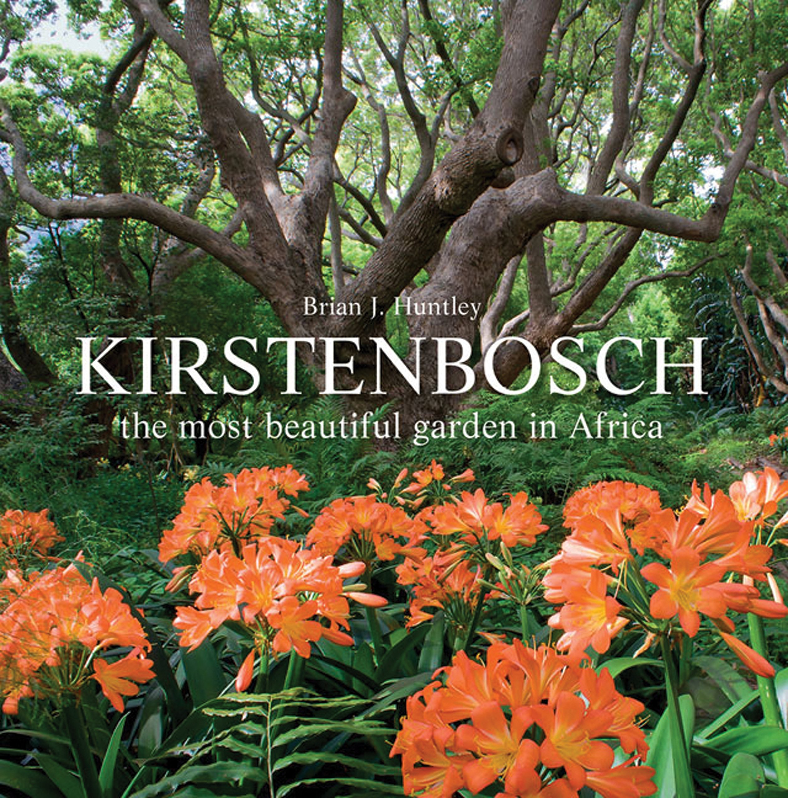 kirstenbosch-the-most-beautiful-garden-in-africa