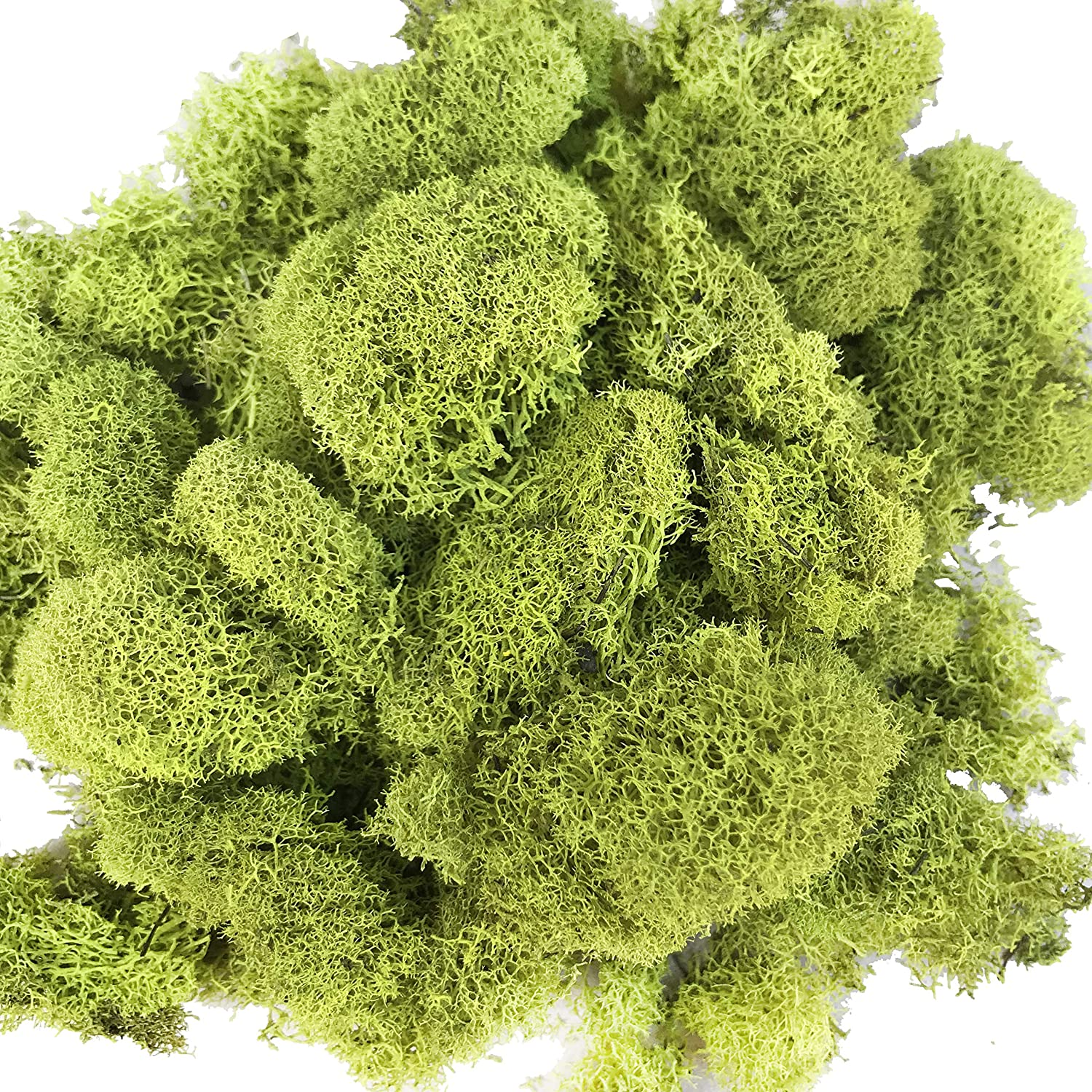 Pack of 3oz Reindeer Moss Preserved Floral Moss for Fairy Gardens, Terrariums, Any Craft or Floral Project or Wedding Other Arts(Chartreuse) DALAMODA FLORAL