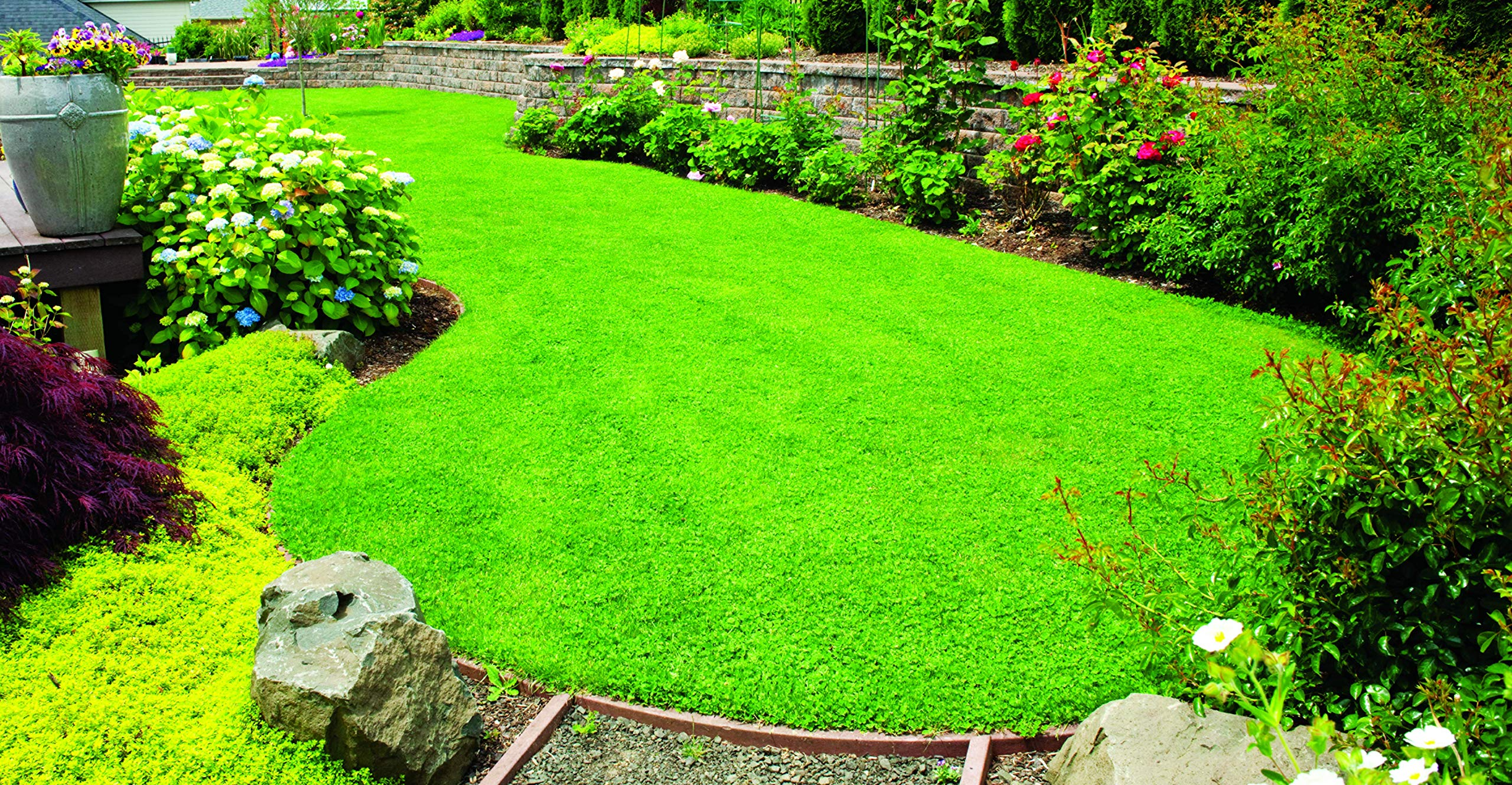 X-Seed 440AS0135UCT-5 MicroLawn Grass & Micro-Clover Mixture, 5, White by X-Seed (Image #5)