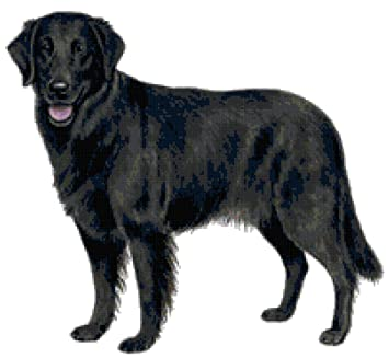 Amazon com: Flat Coated Retriever Dog Counted Cross Stitch