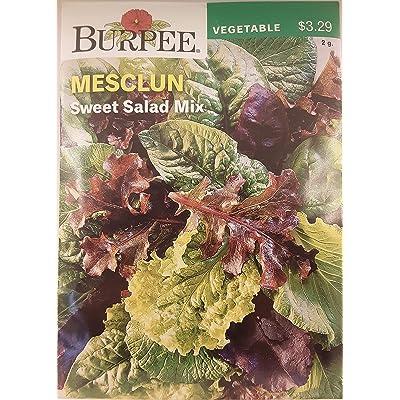 Burpee 60207 Mesclun Sweet Salad Mix Seed Packet : Vegetable Plants : Garden & Outdoor