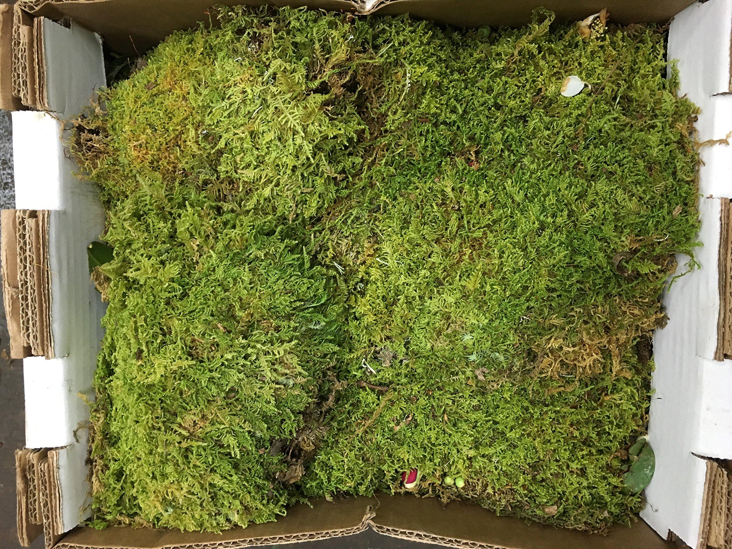 fresh sheet moss. 3 to 5lb box.