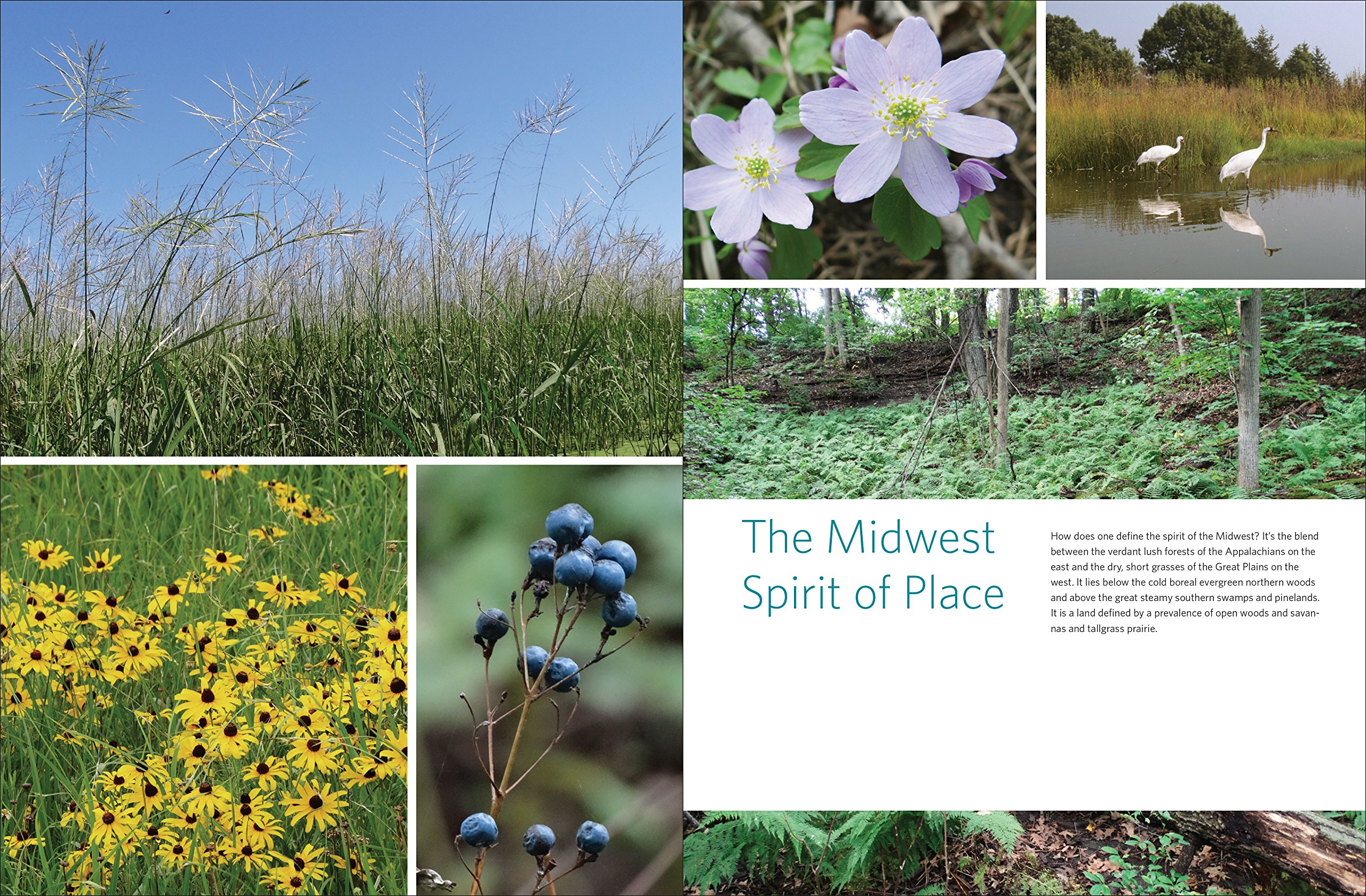 Native Plants Of The Midwest A Comprehensive Guide To The