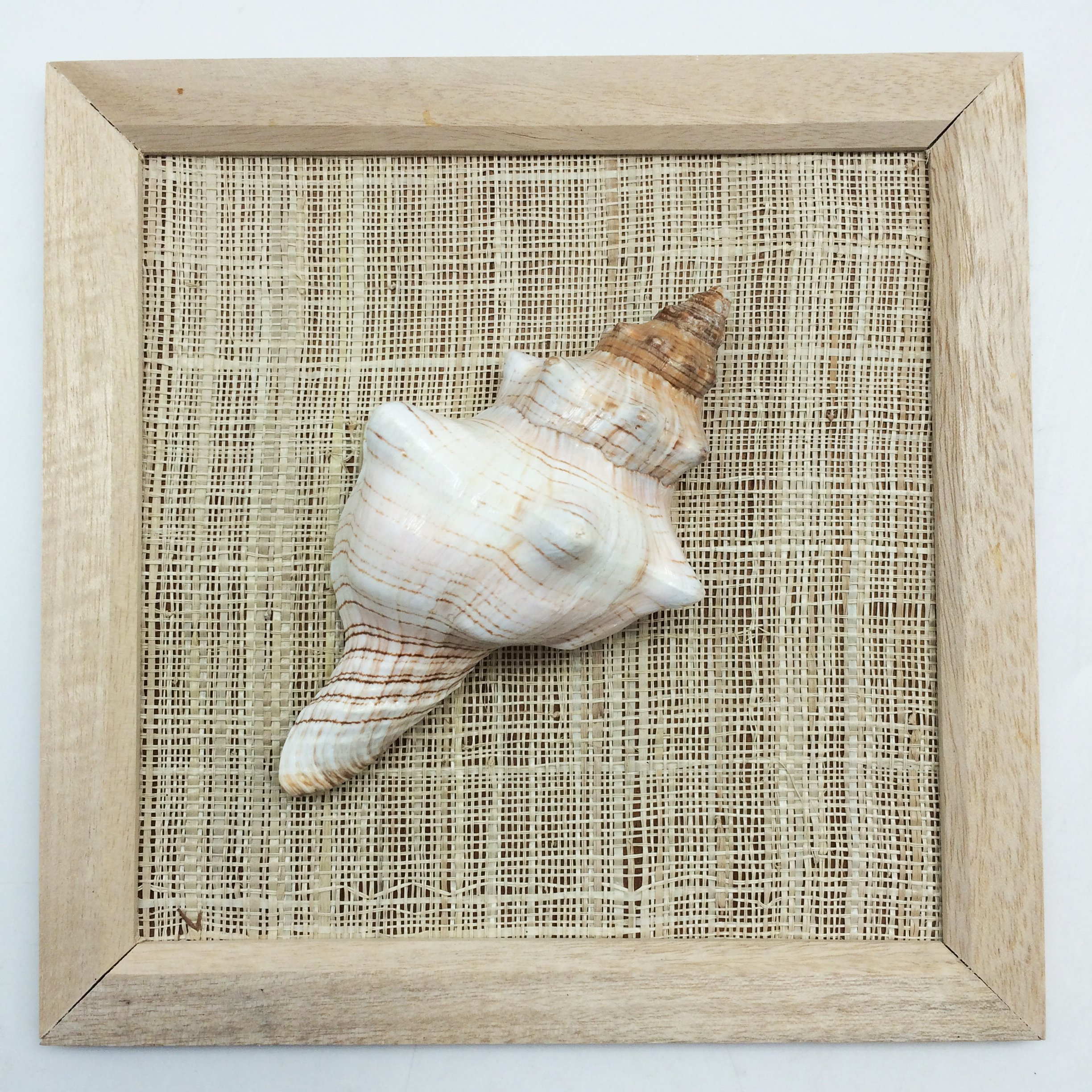 PEPPERLONELY 8x8 Inch Wood Framed Fox Shell, Sea Shell Art Wall Décor