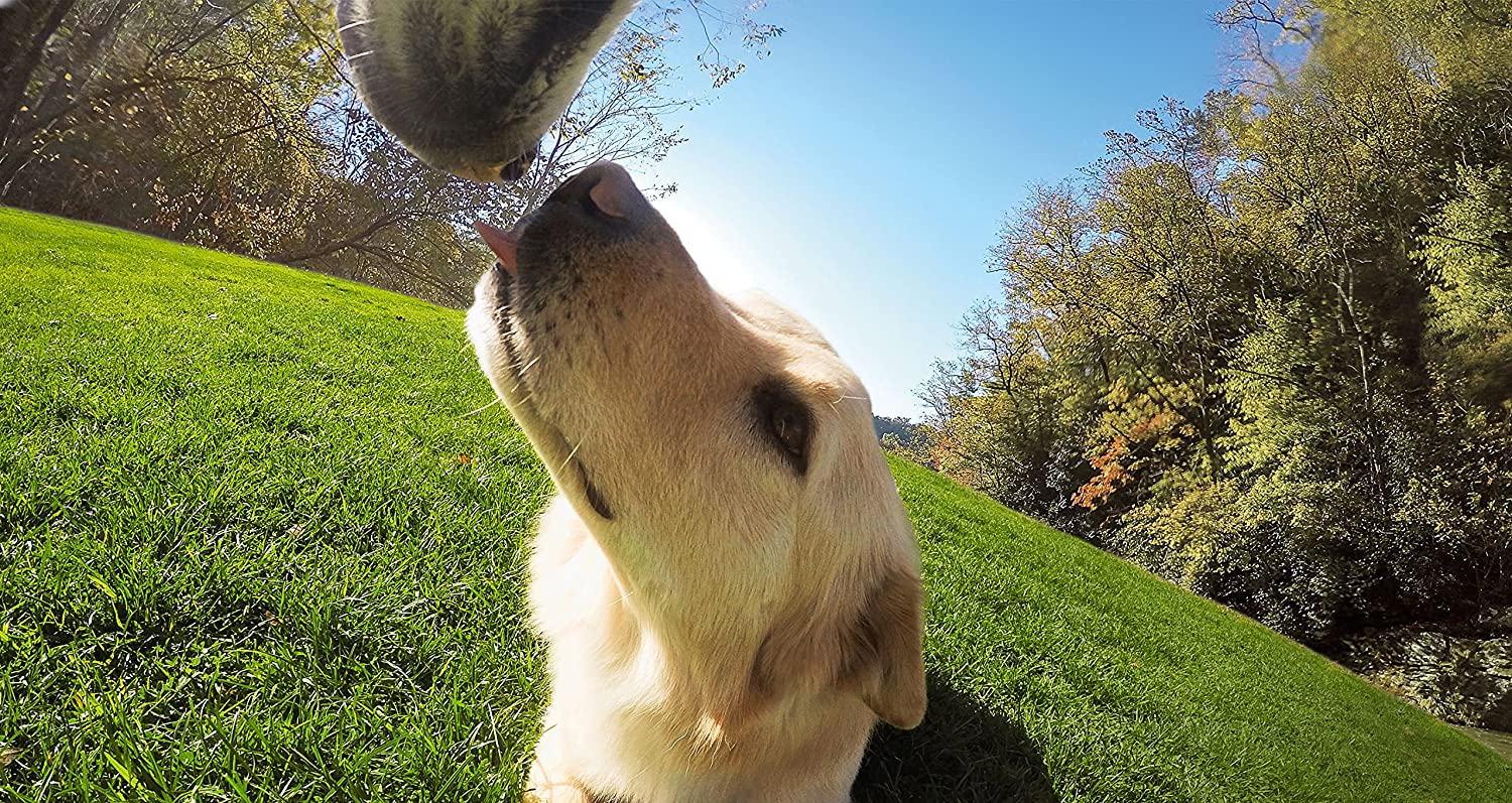 Dog face shooting by GoPro on Amazon