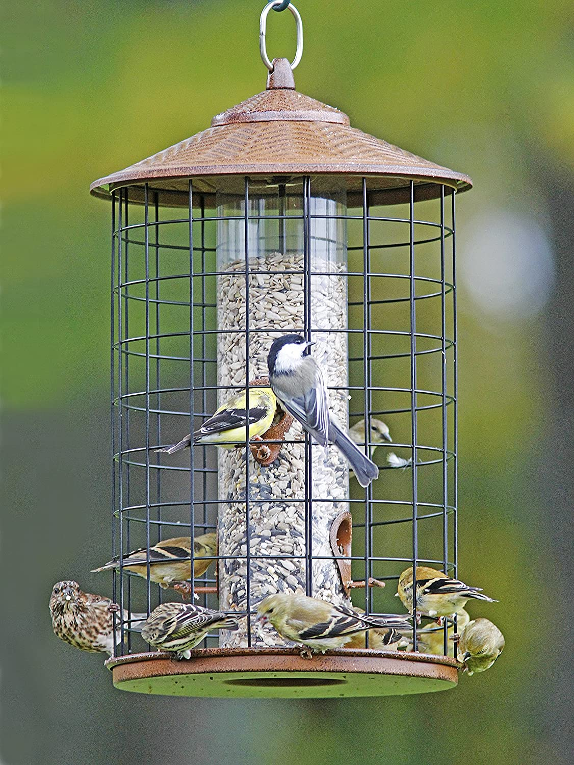 feeder feeders the of shelter pet bird good photo proof x squirrel fortress perky opus