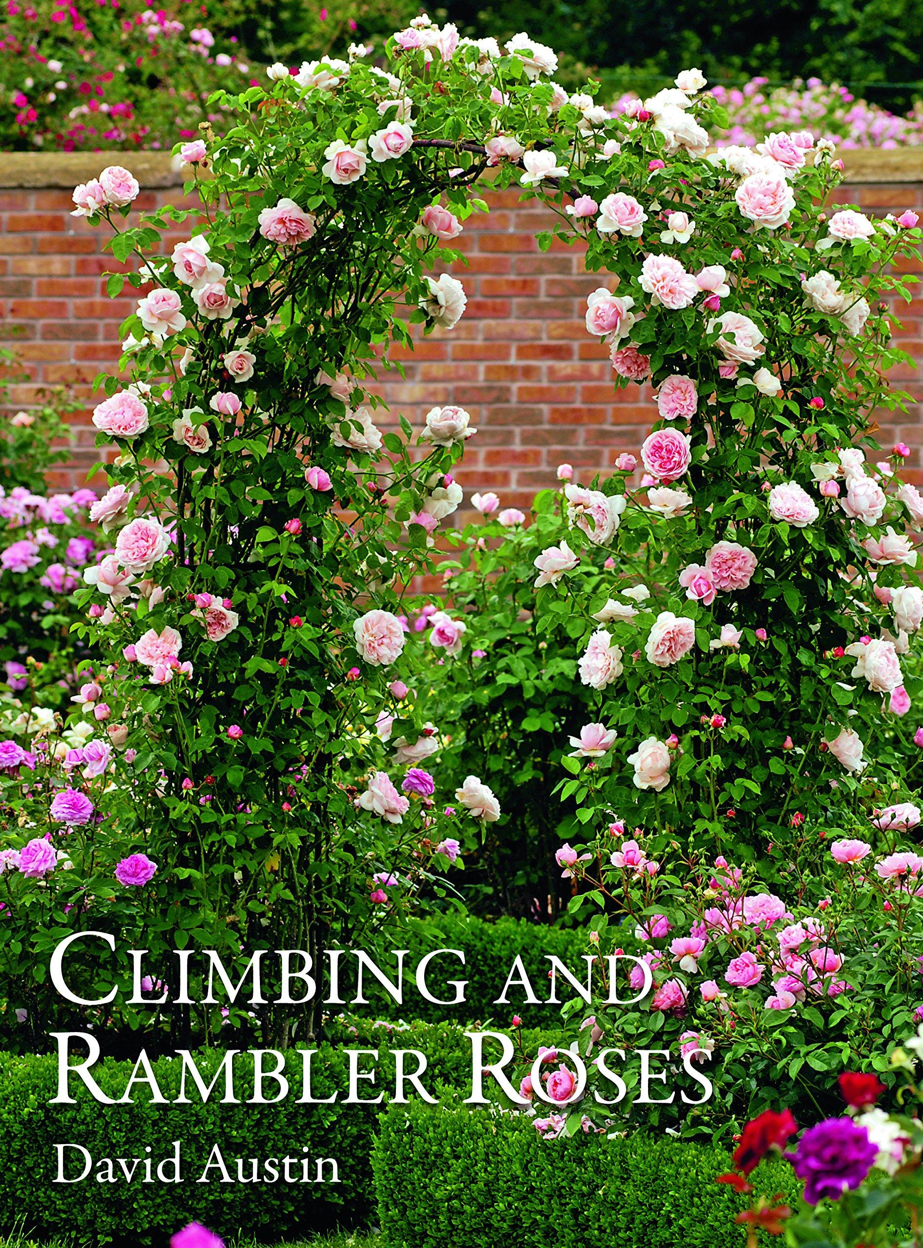 Climbing And Rambler Roses David Austin 9781870673655 Amazon