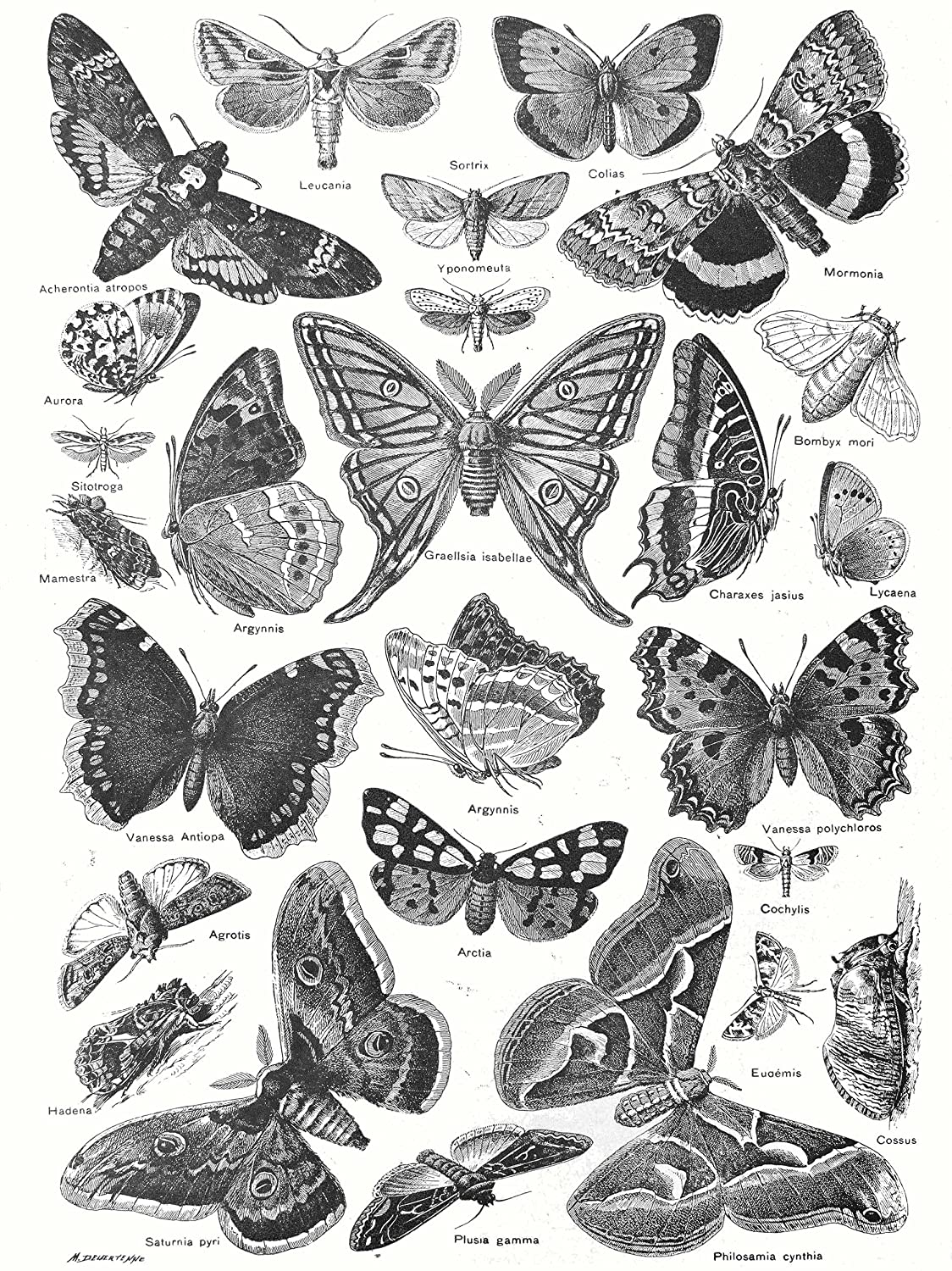 Amazon com scientific illustration butterfly moth black