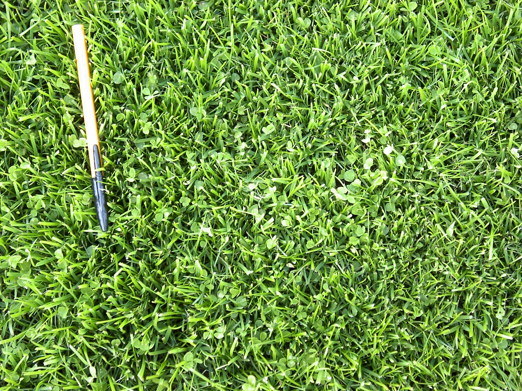 X-Seed 440AS0135UCT-5 MicroLawn Grass & Micro-Clover Mixture, 5, White by X-Seed (Image #4)