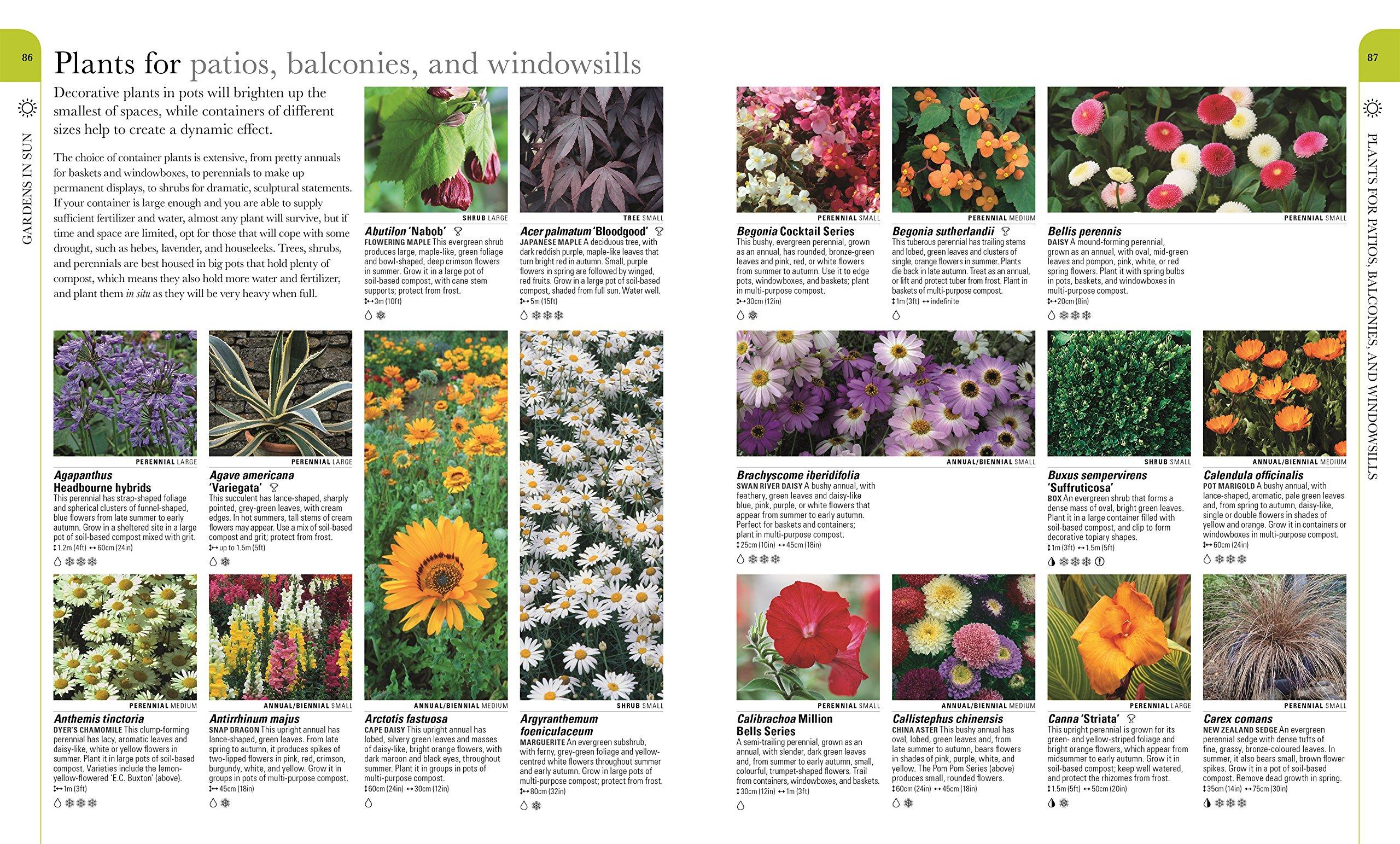 Rhs what plant where encyclopedia dk 9781409382973 amazon books izmirmasajfo