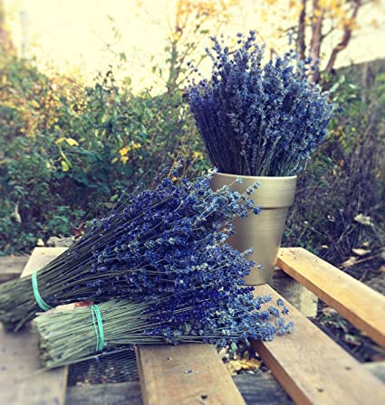 Harrington Marley Large Bunch Provence Lavender Flowers Dried Flower Bouquet 300 Stems Fragrant Wedding Crafts Decoration Amazon Co Uk Kitchen Home