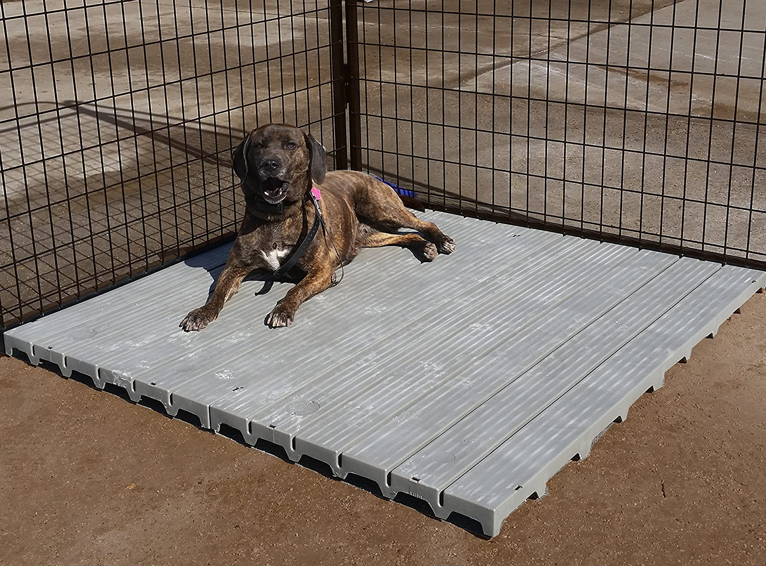 Cove Products 2 X 4 Raised Dog Kennel Comfortable Surface Flooring