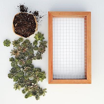 Succulent Gardens Medium Living Picture Planter DIY Kit 6quot X 12quot