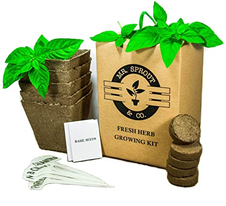 Organic Indoor Herb Garden Kit Amazon mr sprout coanic herb seed starter kit small organic herb seed starter kit small indoor herb garden workwithnaturefo