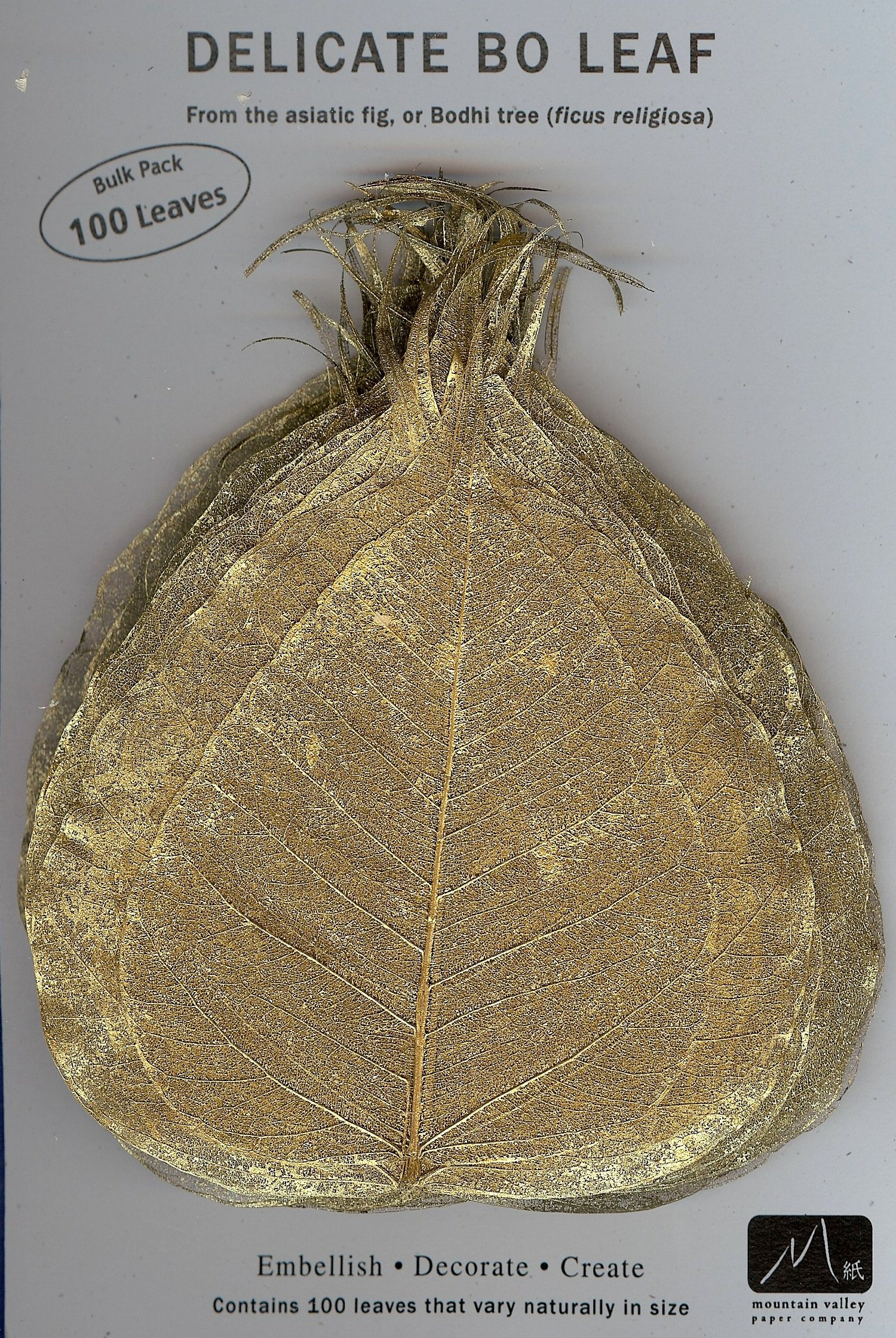 GOLD BO LEAF - Pack of 100 skeleton leaves