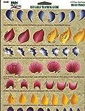 Plaid Folk Art OneStroke: Reusable Teaching Guide: 1133 FLOWER PETAL STROKES
