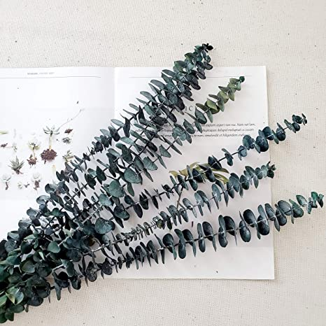 Dried Eucalyptus Leaves for Flower Arrangement Wedding Home Decor Green TRvancat Preserved Eucalyptus Branches 45cm