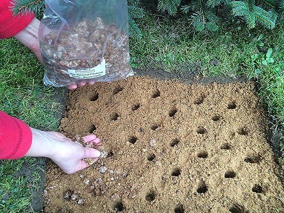 komplettes Set eigener Kleiner Pilzgarten Braunkappe Bio-Pilzbeet