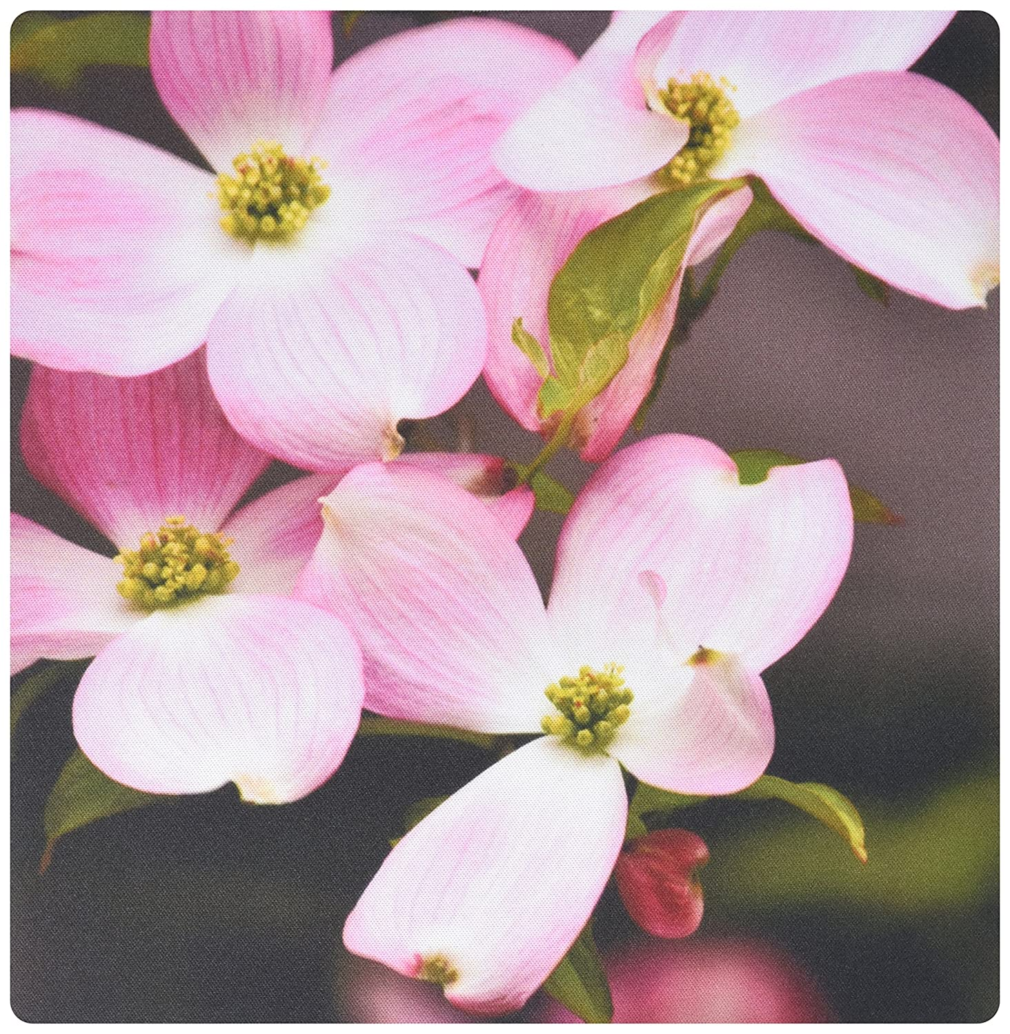 Amazon 3drose Pink Dogwood Flowers Spring Photography Mouse