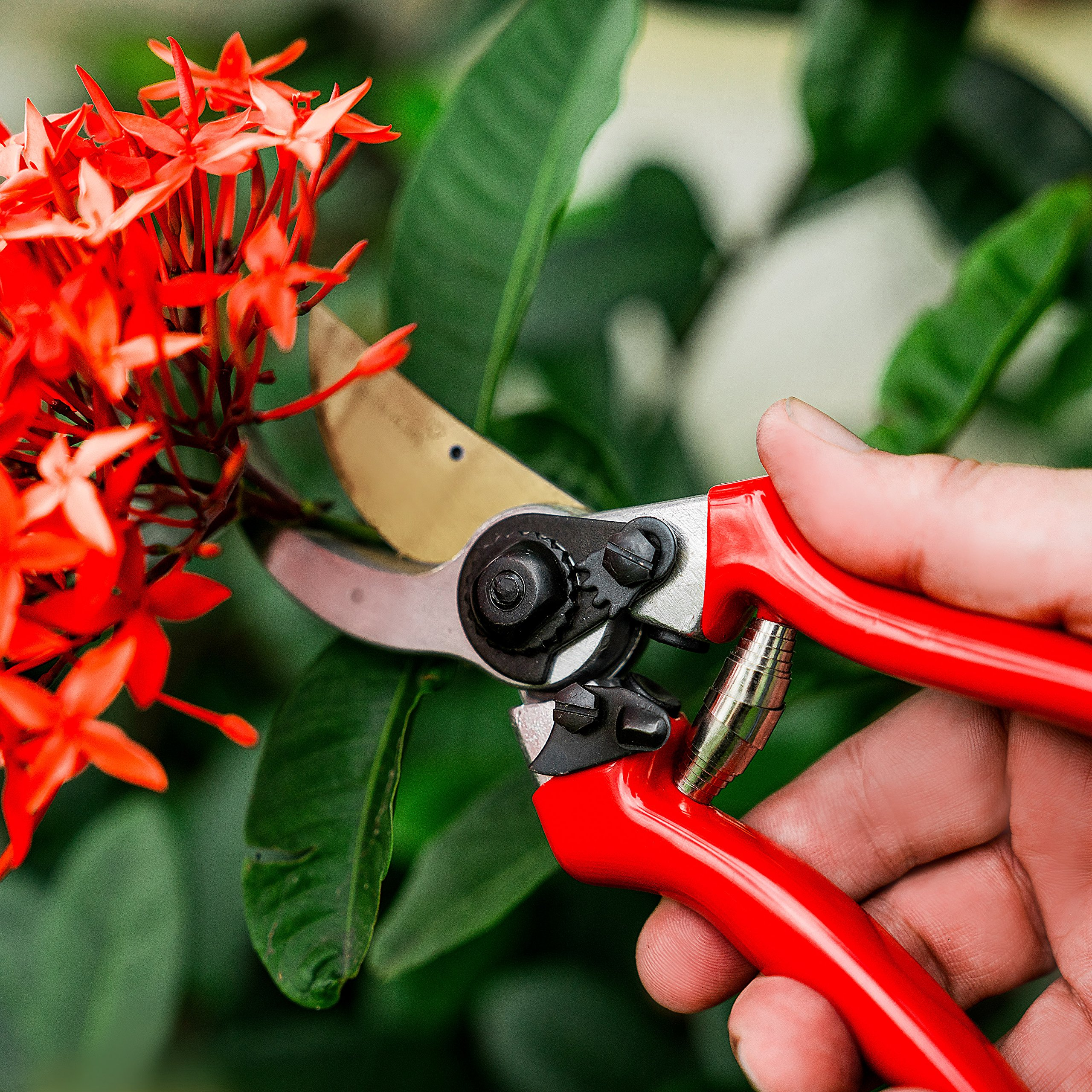 All Weather Pruning Scissors - Drop Forged, Corrosion Resistant, Bypass Hand Shears with Safety Lock - Ultra Sharp Plant Cutters for Indoor and Outdoor Gardeners - 5 Pack