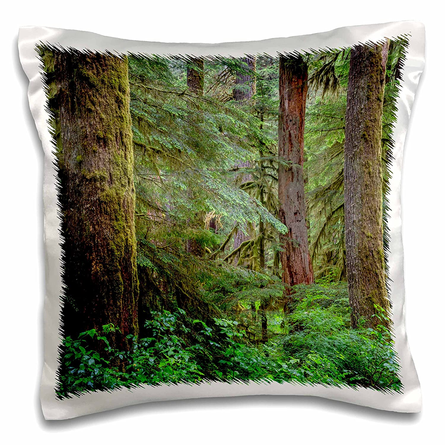 - 16x16 inch Pillow Case Old Growth Forest with Large Douglas fir pc/_279352/_1 Oregon Forests Willamette NF 3dRose Danita Delimont