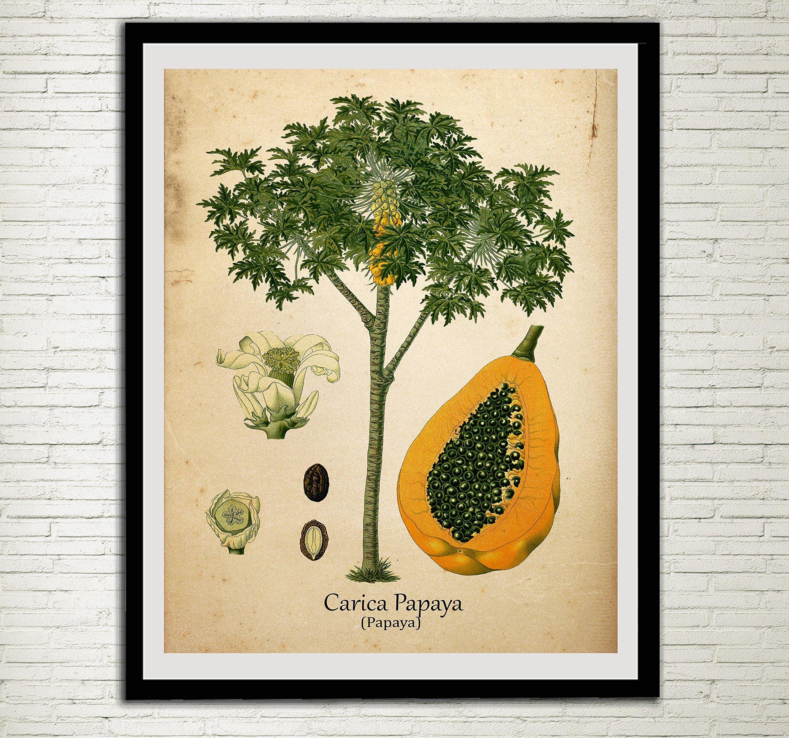Papaya Vintage Print Set Herbs Wall Art Carica Papaya Antique Botanical Art Plants Kitchen Decor Buy Online In India At Desertcart In Productid 57168152