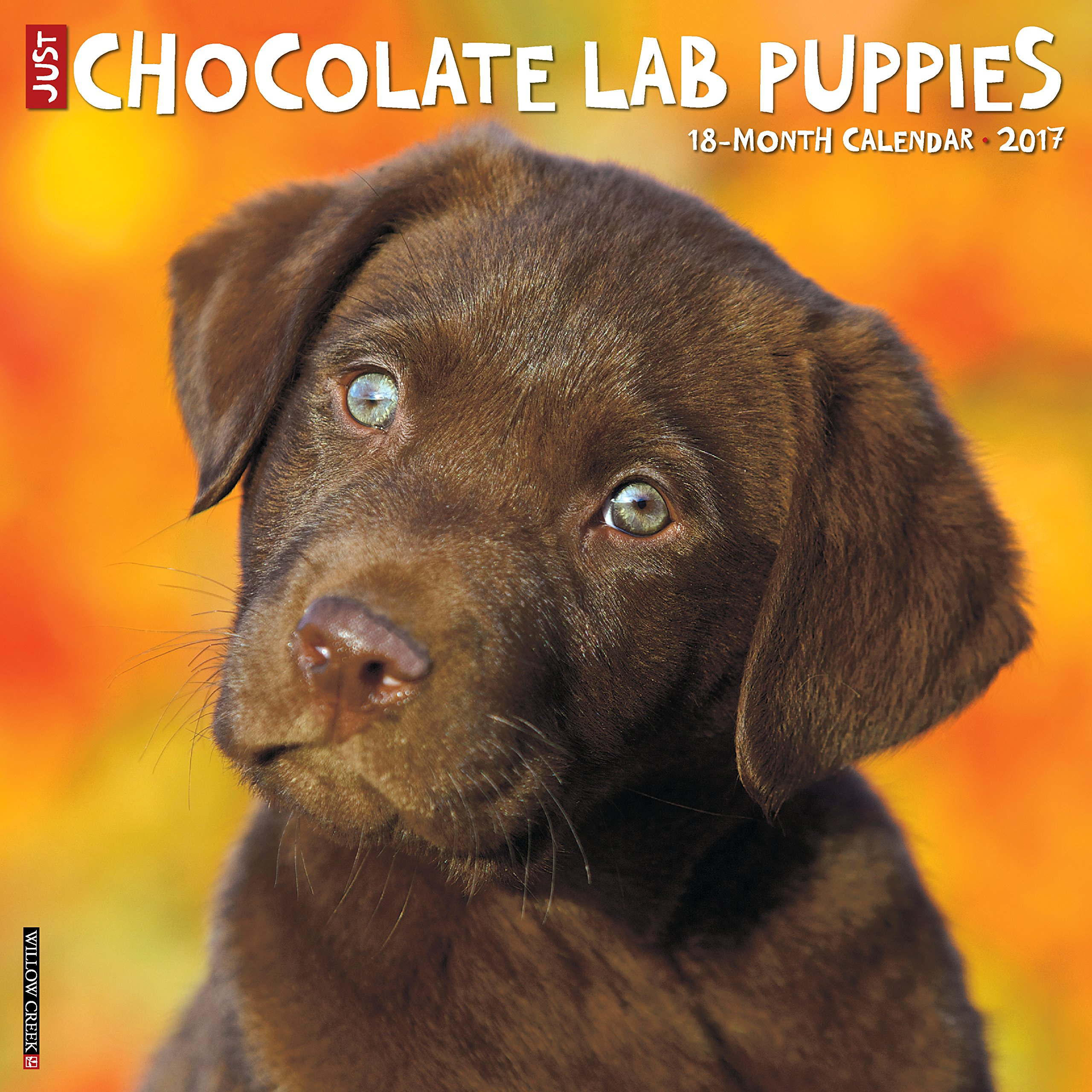 Chocolate Puppies Calendar Breed Calendars product image