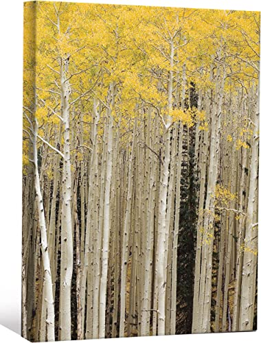 JP London LCNV0028 Yellow Birch Forest 2″ Thick Heavyweight Stretched Canvas Wall Art Mural