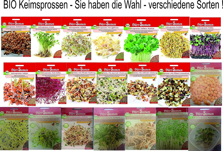Bio Keimsprossen vers Sorten Alfalfa Radies Brokkoli Weizen Rauke Linsen Zwiebel (Alfalfa) Dürr