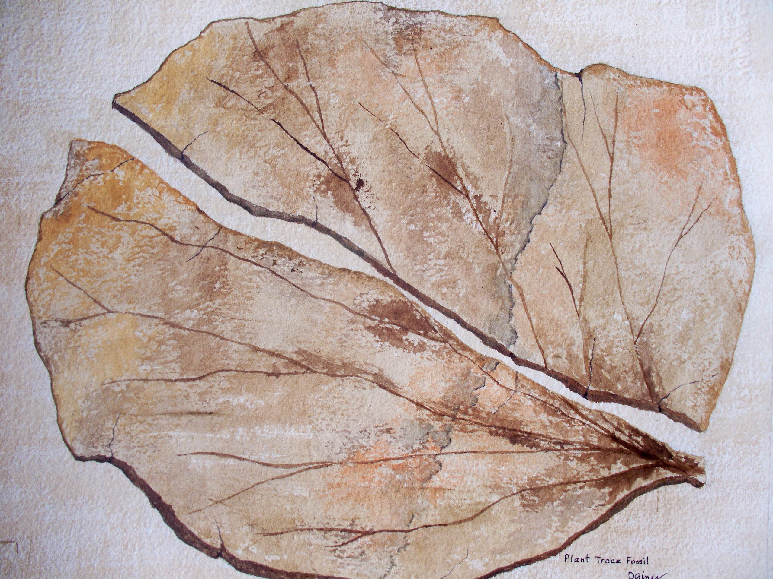 Trace Fossil Leaf by